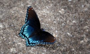 Butterfly change chrysalis transformation in eating disorder treatment | Indianapolis, IN